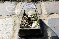 Florarium oszi napsutesben 10. (Small)