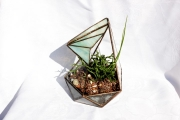 Florarium novenykevel 1a (Small)